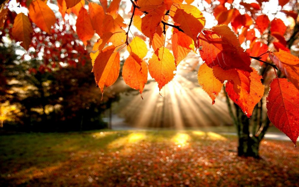 img-saison-automne1